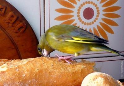 20110212092848-pajaros-en-la-cocina-mi-ninez.jpg