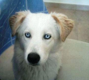 20110213141238-perro-abandonado.jpg