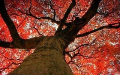 20111105141531-quimio-otono-cancer-mama.jpg