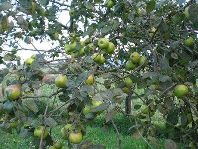 20120804195122-manzana-marx-ruben-lapuente-valle-iregua.jpg