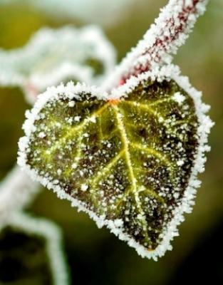 20101212210101-pureza-corazon-belleza.jpg