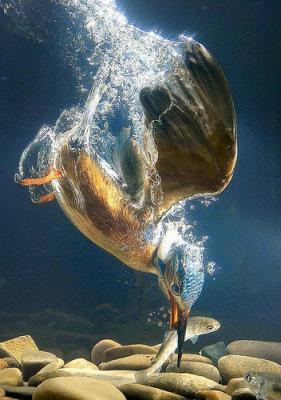 20110327092327-martin-pescador-biomimesis.jpg