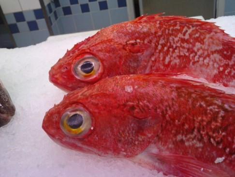 20111029083917-cabrachos-peces-sin-parpados-pescaderia.jpg