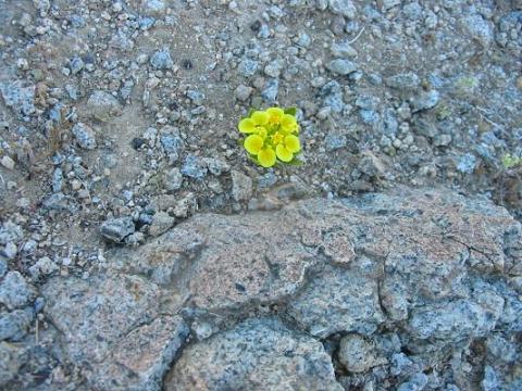 20140324113109-flor-sola-ruben-lapuente.jpg
