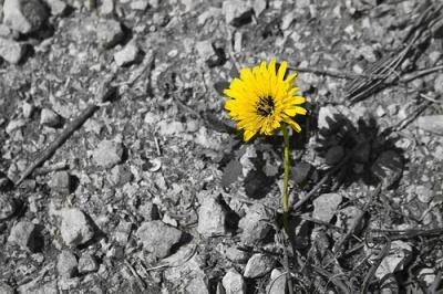 20190730154803-la-flor-del-miedo-ruben-lapuente-berriatua.jpg